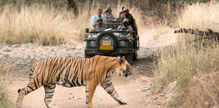 Golden Triangle and Ranthambore